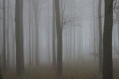 Woodland - Steve Baker - 1st