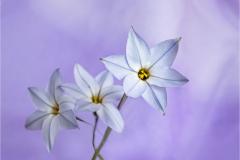 Starflowers - Chris Eaves - 2nd