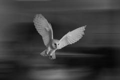 Owl - Jim Hicks - 1st