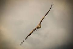 image-05-Eagle