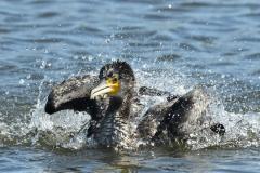 image-09-Making a splash